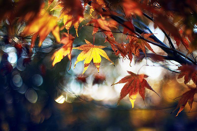 Кленовая осеньphoto preview