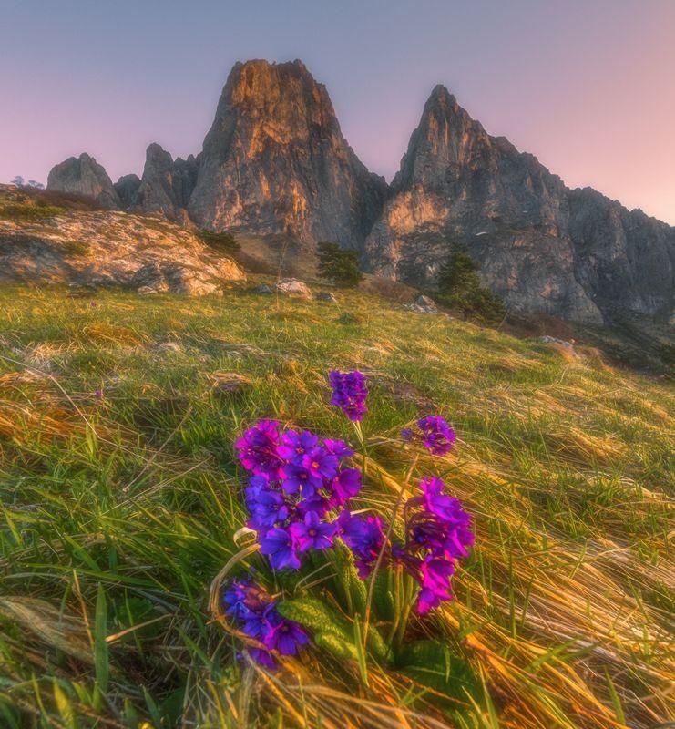 западный кавказ, ингушетия, цей-лоам, цветы, рассвет, весна Цветы и скалы горы Цей-Лоамphoto preview