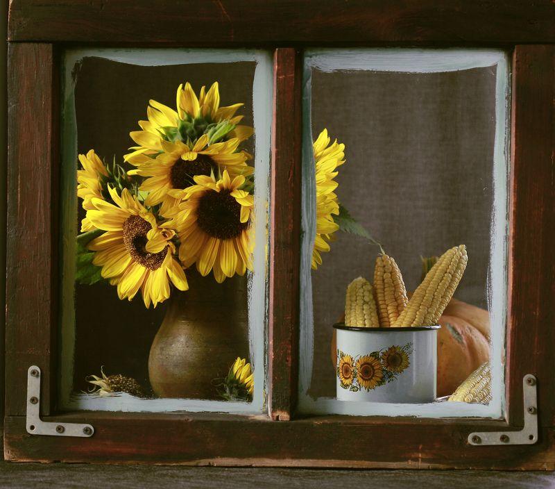 натюрморт, фотонатюрморт, окно, осень, кукуруза, подсолнухи, наталья казанцева Осенние истории...photo preview