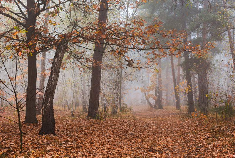 лес осень октябрь утро туман Последние листы бросает старый дубphoto preview
