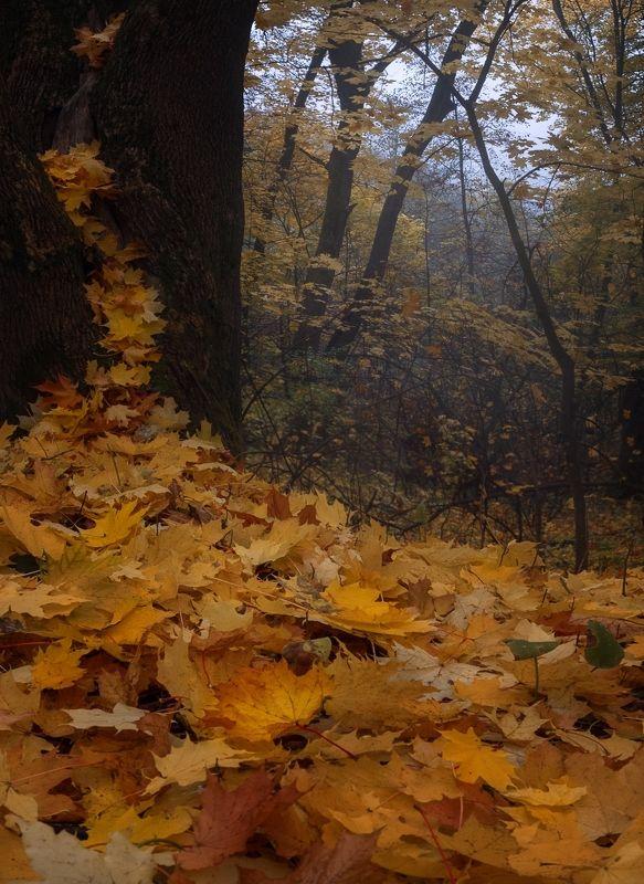 лес, свет, утро, природа ***photo preview