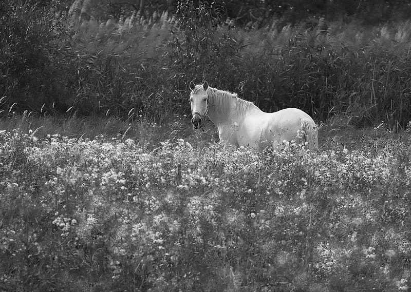 лошадь, красота, поле,природа, horse, beautiful, field, nature Идиллияphoto preview