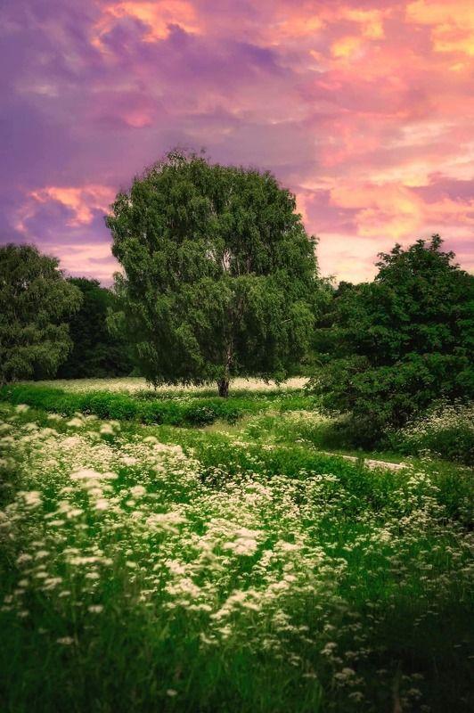 лето, summer , природа, nature, пейзаж, landscape Лето...ах...летоphoto preview