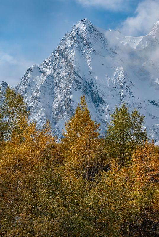 Северный Кавказ, горы, гора, вершина, путешествие, хребет, Кабардино-Балкарский высокогорный заповедник, заснеженные вершины, днём, дневное, осень, осеннее, жёлтое, синие,   Серия «Горная осень»photo preview