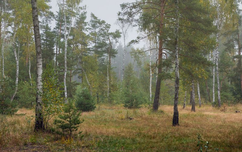 осень сентябрь утро туман Уходит лето на покойphoto preview
