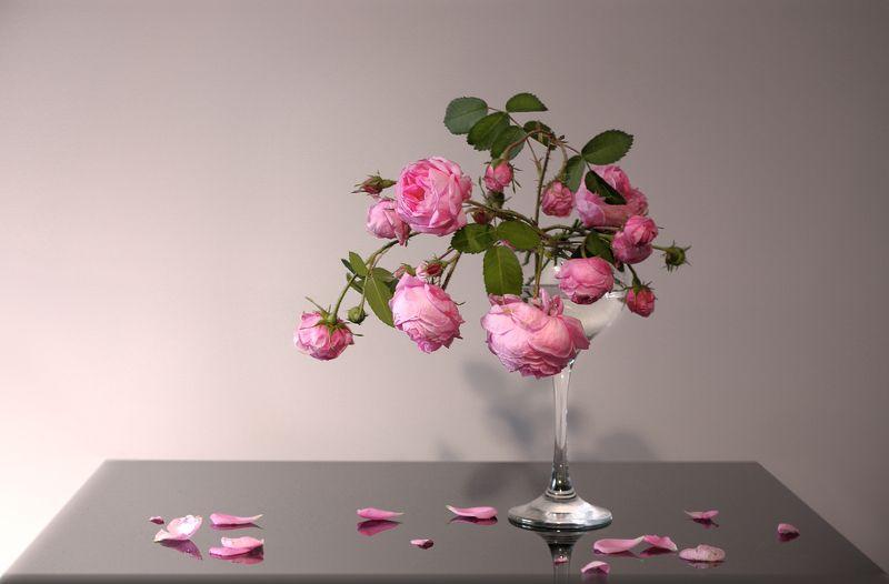 розы Француженкиphoto preview
