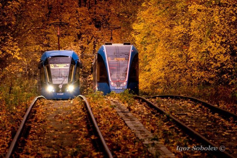 сокольники, москва, трамвай Осенние трамвайчикиphoto preview