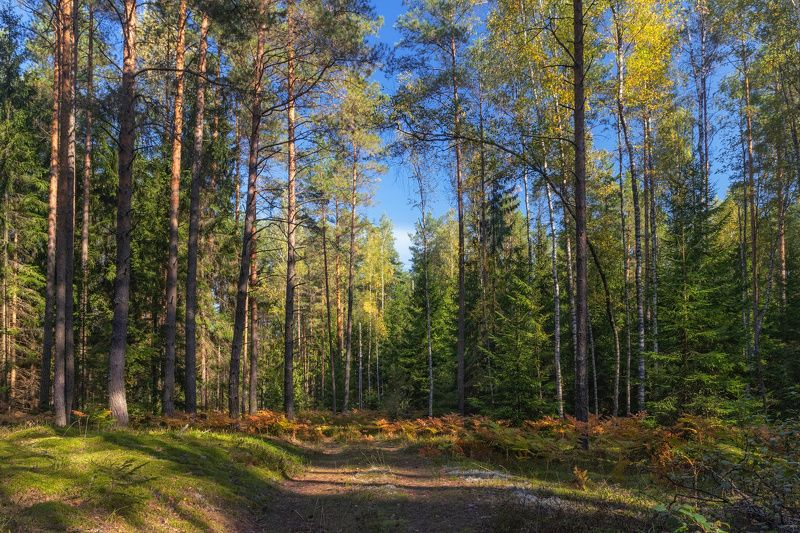 осень, лес, дорога, небо, Сентябрь в лесуphoto preview