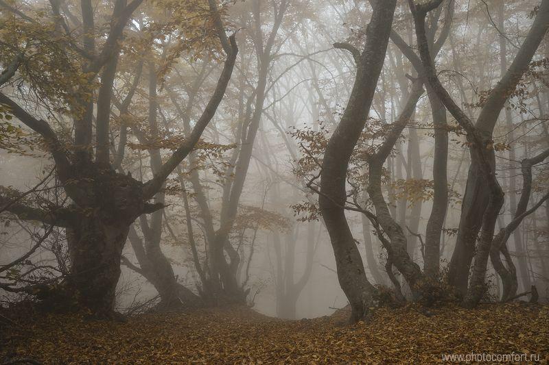 Буковые леса Крыма. Осенние туманыphoto preview