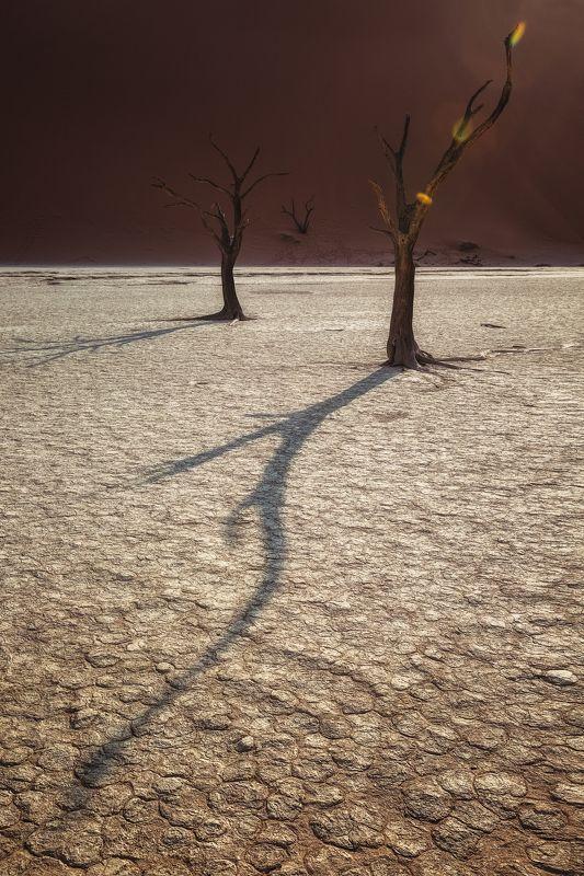 #тень, #дерево,#мертвая долина , #намибия, #африка, #дидвлей, #дюна,#озеро, #africa ,#namibia ,#tree ,#dune ,#deadvley valley ,#deadvley #lake Тень жизниphoto preview