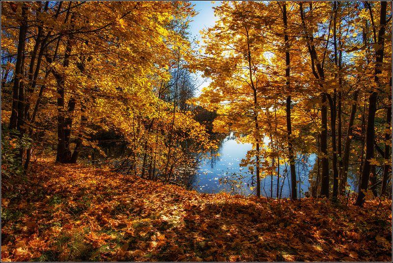 москва, серебренный бор, оз. бездонное, осень Меж берёз и сосен тихо бродит Осеньphoto preview