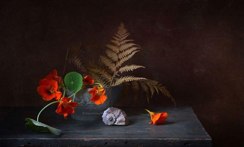 натюрморт, осень, настурция осеннееphoto preview