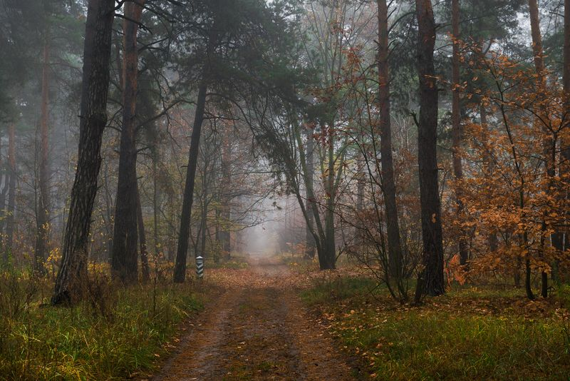 лес, осень, ноябрь, туман Где-то там, вдали туманнойphoto preview