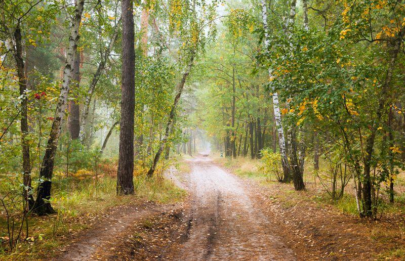 осень сентябрь утро рассвет туман Пустеют рощи, птиц не слышно болеphoto preview