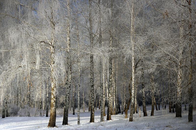 Зимы началоphoto preview