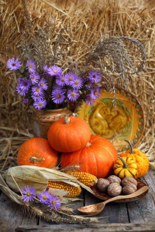 октябрь, осень, тыква Октябрьphoto preview
