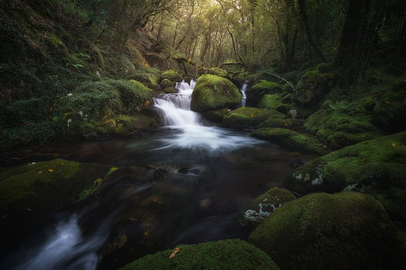 #wood #water #waterfall #river #green #spring #mood Into the woodphoto preview