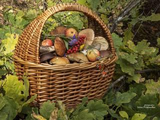 Последние дары осеннего леса