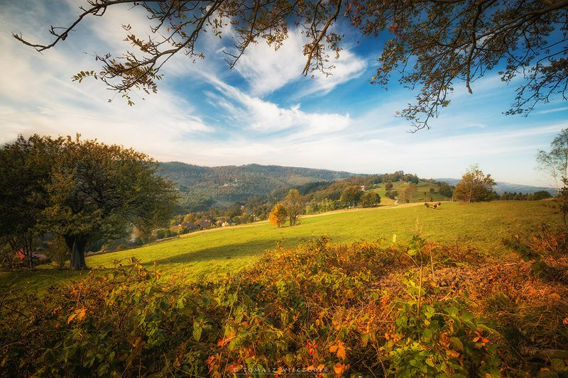 landscape, poland, light, autumn, awesome, amazing, sunrise, sunset, lovely, nature, travel, mountains, trees, orange, cow, colors In the mountains фото превью