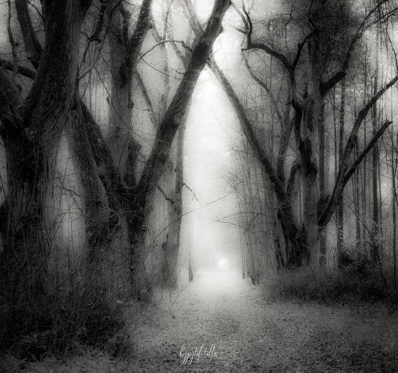 forest, autumn, nature, forest road, fog, dawn, forest atmosphere, light, leaves, old trees,  Autumn afterglow - B&Wphoto preview