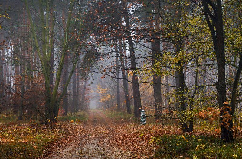лес осень ноябрь поздняя туман Шурша ложится лист к моим ногамphoto preview