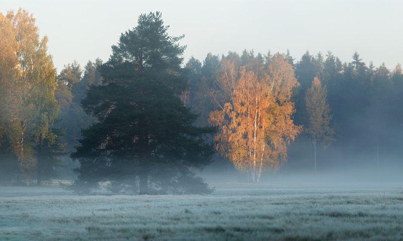 павловский, павловскийпарк, питер, царскоесело, рассвет, туман Октябрь...photo preview