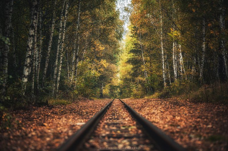 landscape, poland, light, autumn, awesome, amazing, sunrise, sunset, lovely, nature, travel, trees, railroad, leaves, colors, forest Infinity фото превью