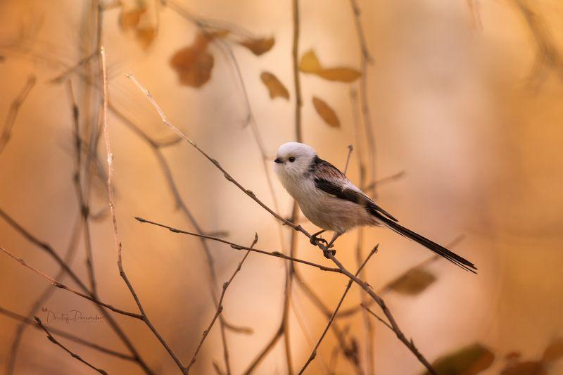природа, животные, птицы, насекомые,вьетнам, остров фукок Невестушкаphoto preview