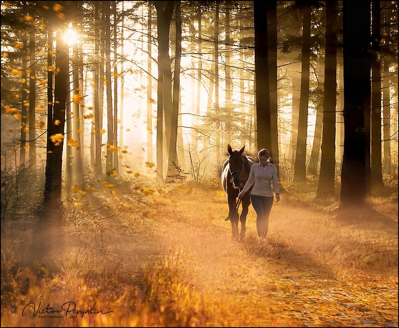 Утро в осеннем лесу...photo preview