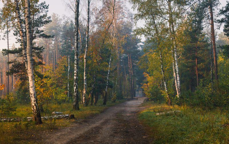 лес осень октябрь утро туман Ситцевая осеньphoto preview