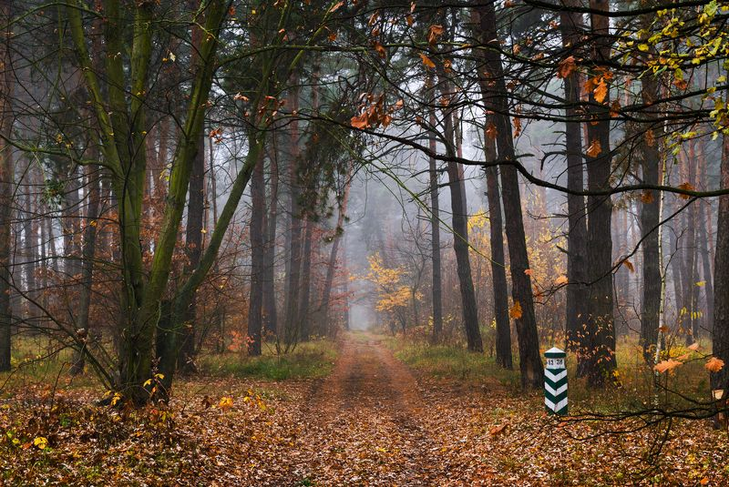 лес осень ноябрь снег Когда зима меняет всё вокругphoto preview
