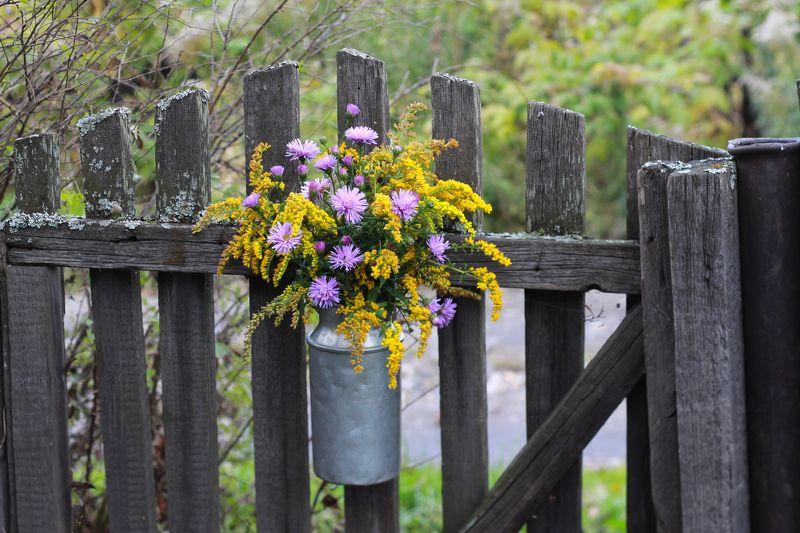 натюрморт, фотонатюрморт, осень, цветы,  наталья казанцева Последние цветыphoto preview