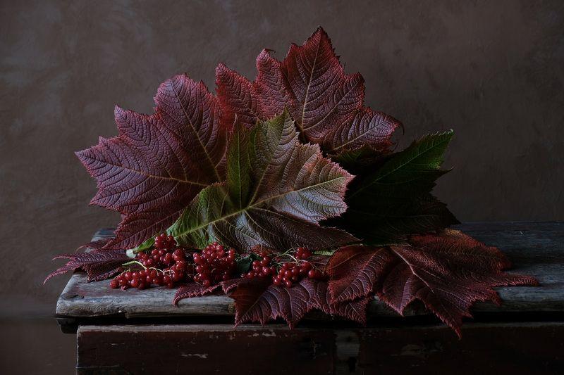 Still life, Autumn, Fall, осень, leaves, viburnum, colors, light, калина,  Осени краскиphoto preview