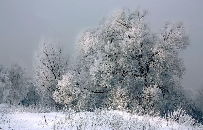 Морозным днём на берегу Пехорки...photo preview