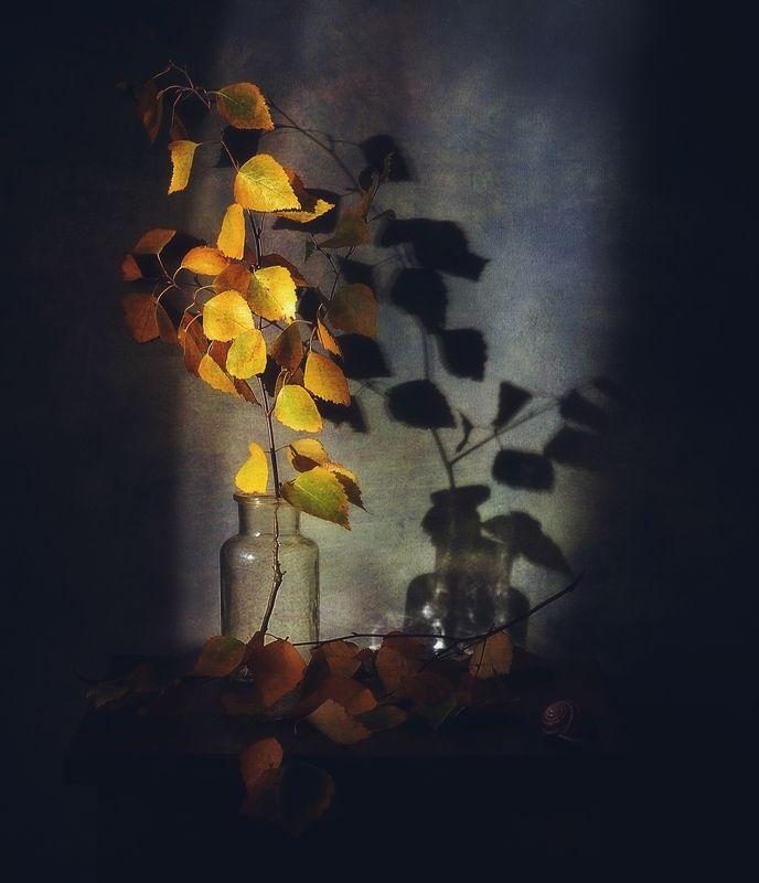 натюрморт,композиция,осень,тень,веточка просто осень... фото превью