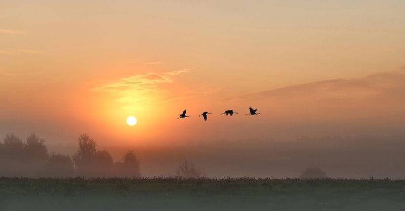 восход, солнце, журавли На рассветеphoto preview