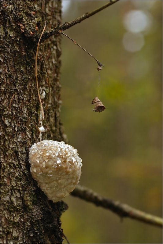 осень, паутинка, гриб, роса Лесной звонок.photo preview