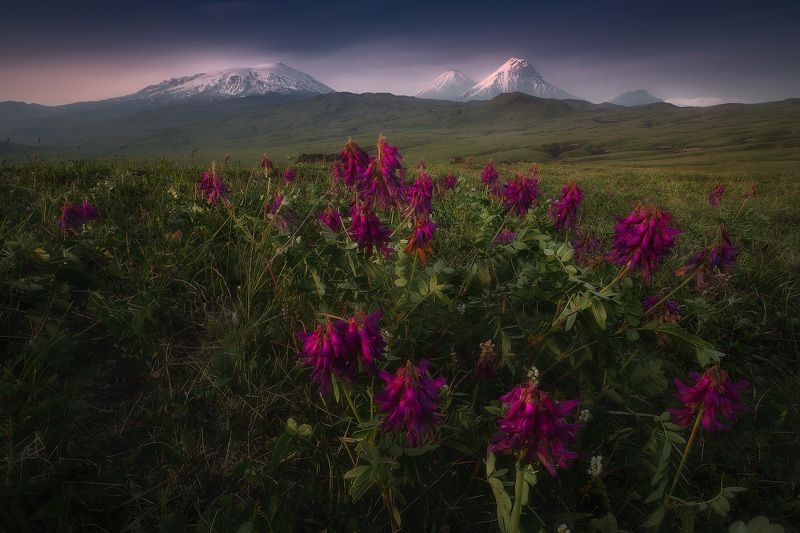 камчатка В стране вулканов и цветовphoto preview