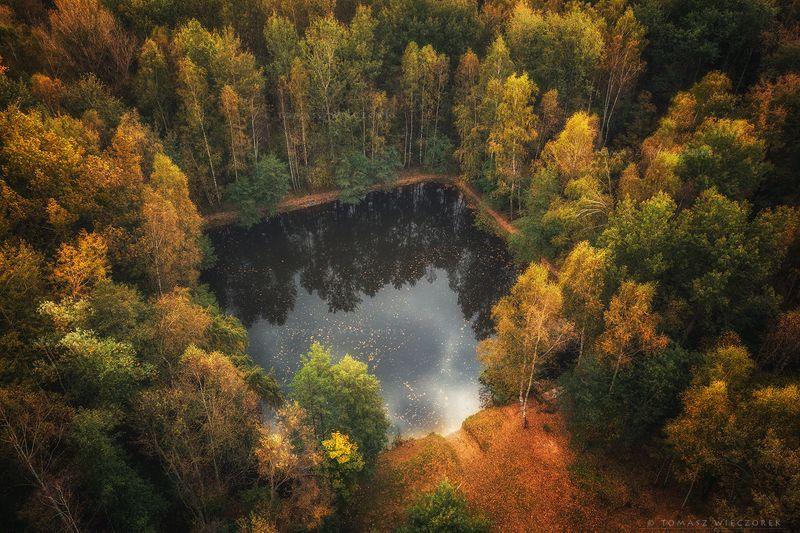 landscape, poland, light, autumn, awesome, amazing, sunrise, sunset, lovely, nature, travel, drone, trees, orange, shadows, dji, forest, square Magic square фото превью