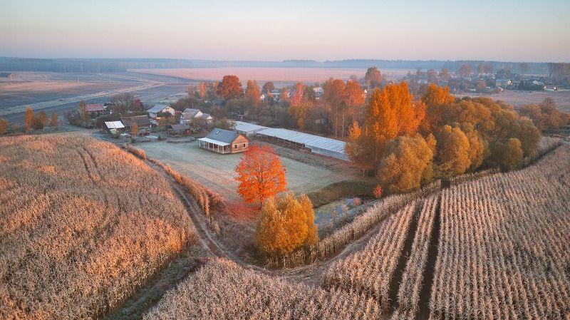 беларусь, деревня, заморозки, иней, луга, октябрь, осень, поля, рассвет, уса, утро Осеннее Плоскоеphoto preview