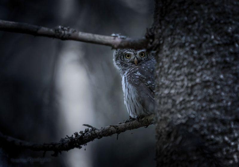 В тёмном лесе...