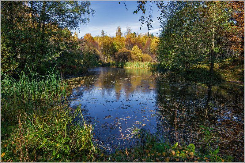 москва, мещерский парк, осень, пруд, лес Отражается небо в осеннем прудуphoto preview