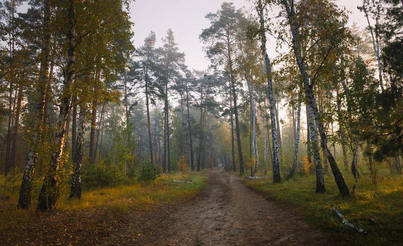 лес осень октябрь утро рассвет Дни последнего теплаphoto preview