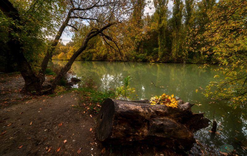 Осенние листьяphoto preview