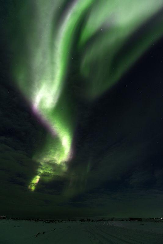 чукотка, арктика, чукотское море, льды, зима, северное сияние, аврора, белые медведи, полярные медведи Вот и зима пришла в Арктику...photo preview