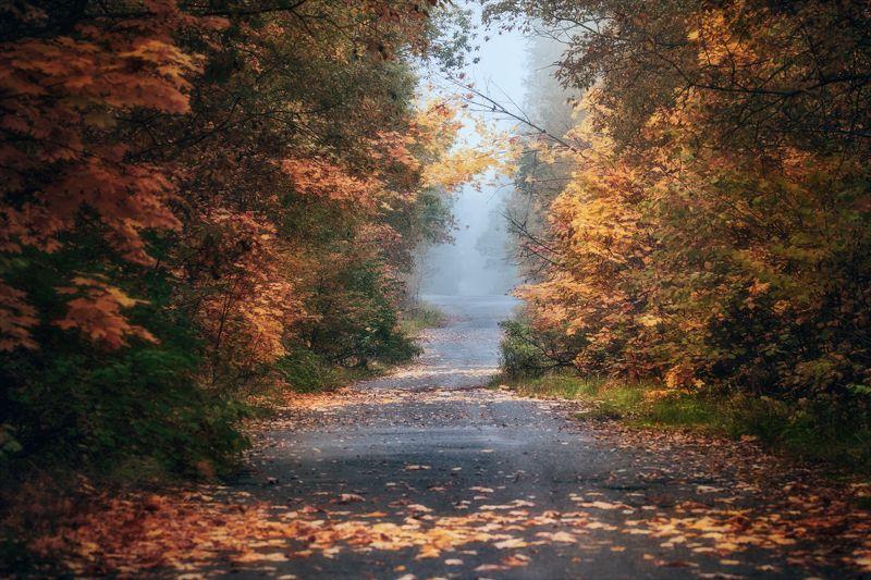 Здесь тихо бродит Осень.photo preview