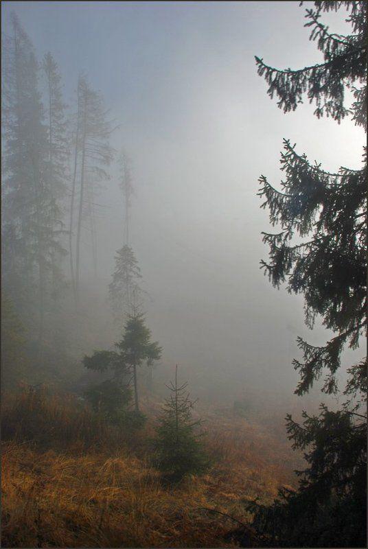 Туманная серия 2(6)photo preview