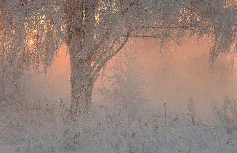 Про нежность зимнего утраphoto preview