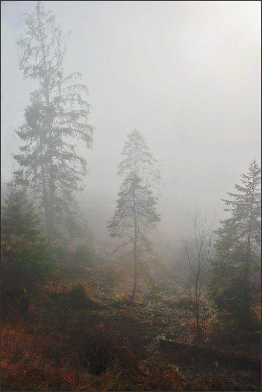 Туманная серия 2(7)photo preview