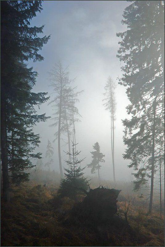 Туманная серия 2(8)photo preview